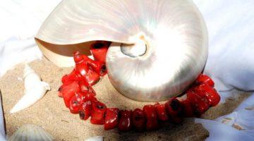 K800_1STone-Shells--Coral